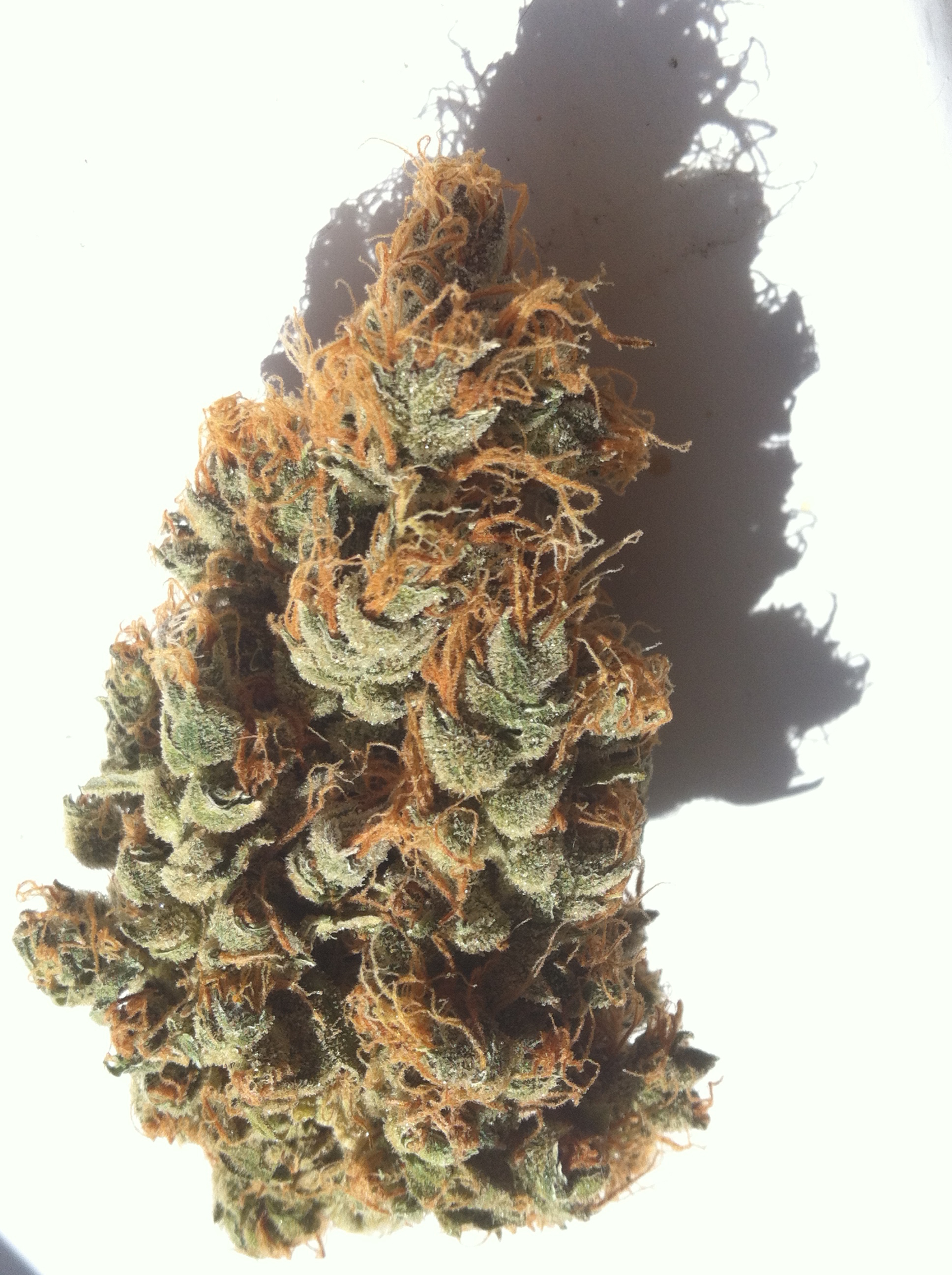 frosty buds and orange hair