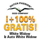 https://www.dutch-passion.com/img/nieuws_org/160x160-ww-promo-ES%202.jpg