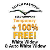 https://www.dutch-passion.com/img/nieuws_org/160x160-ww-promo.jpg
