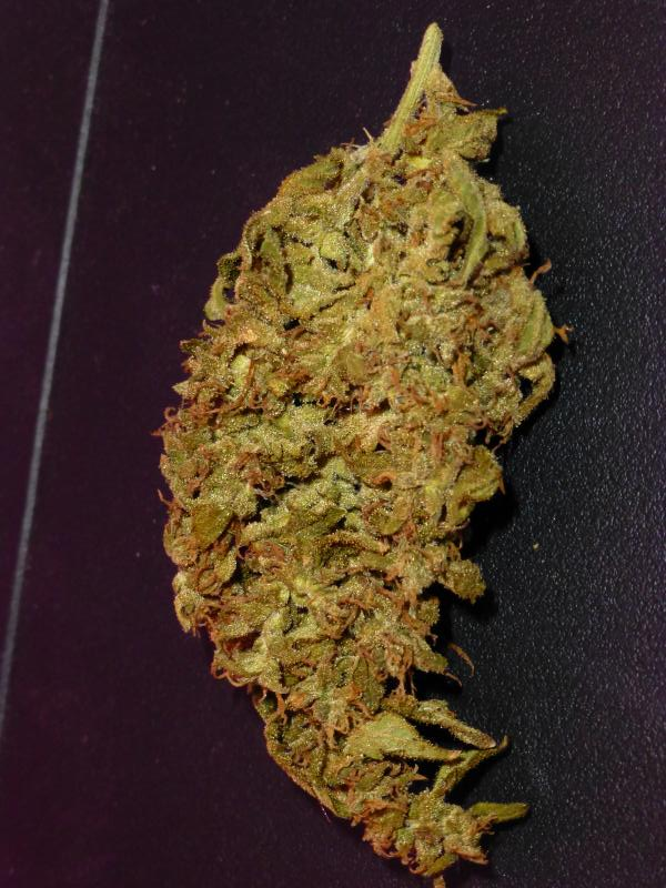 cured nugget of White Widow