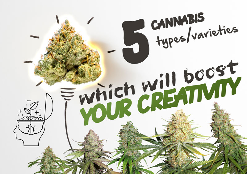 5 varieties of cannabis to boost your creativity