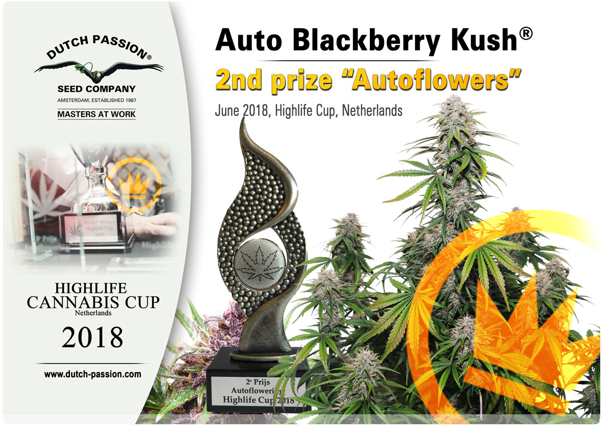 Auto Black Berry Kush Highlife Cup 2018