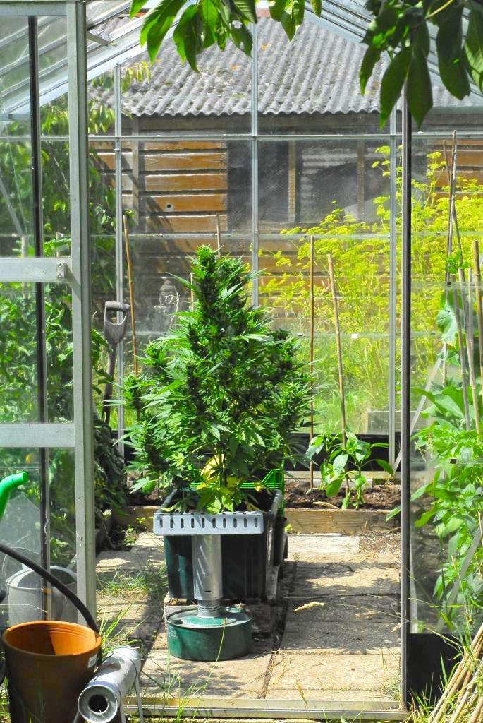 greenhouse auto
