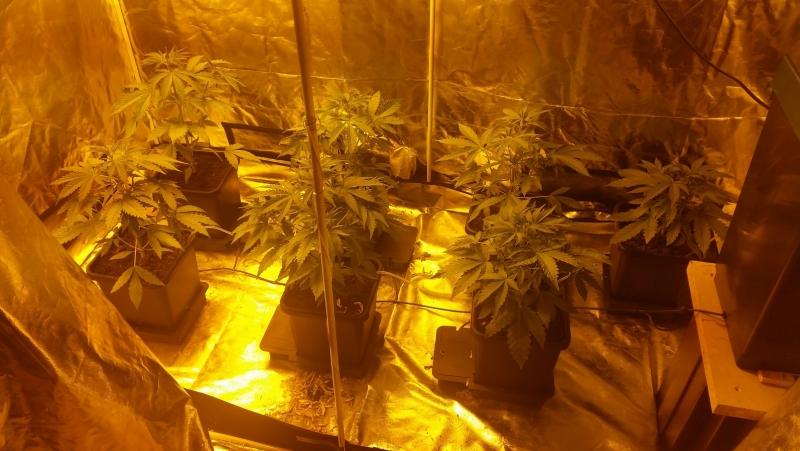 start of the grow