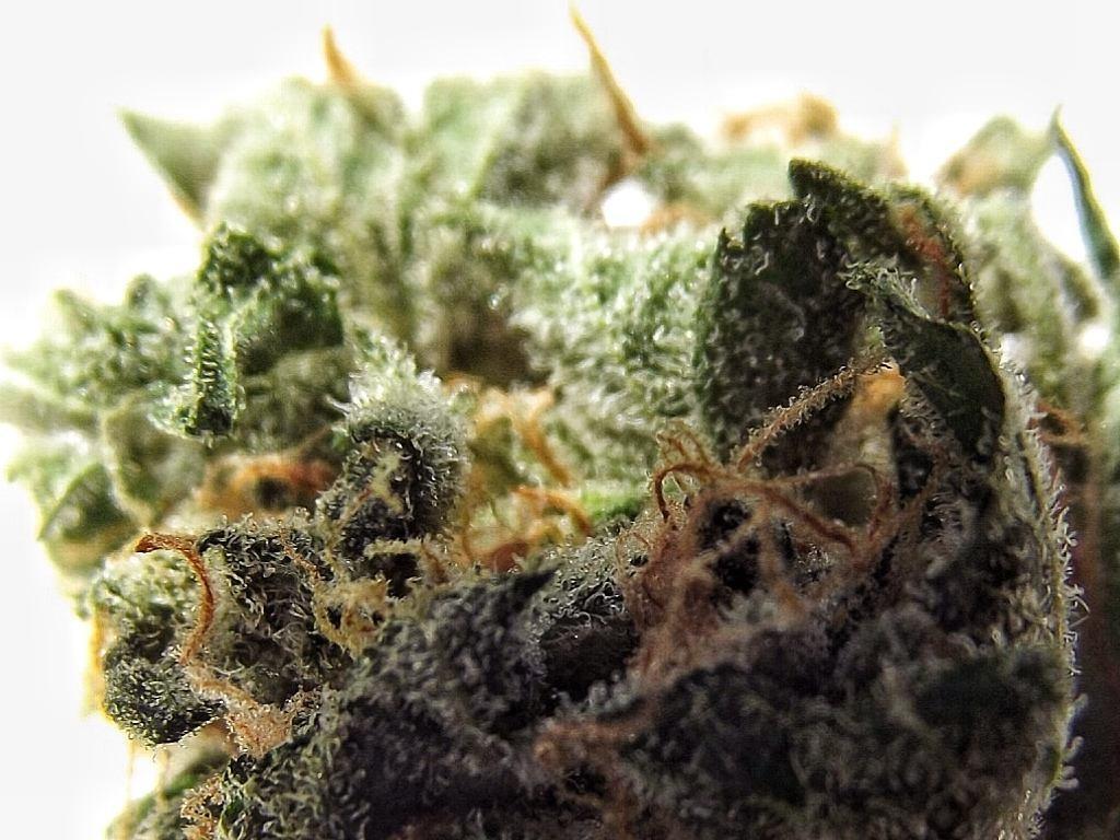 close up of frosty bud