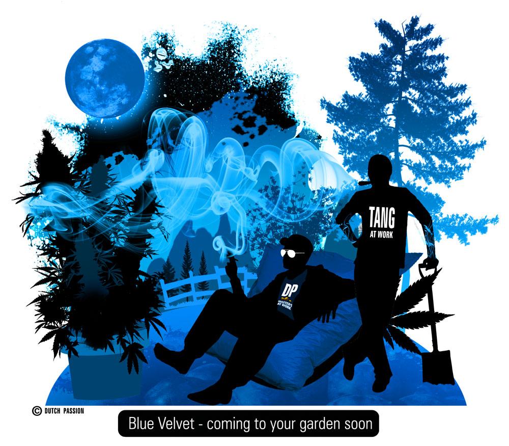 Blue Velvet dream image