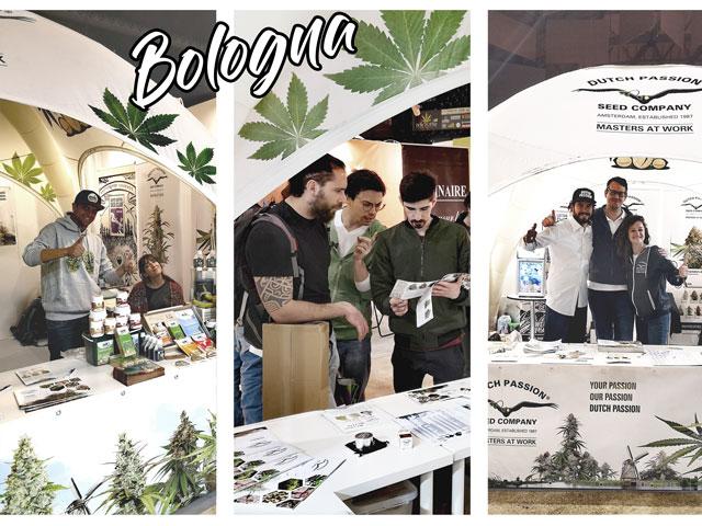 Bolonga expo
