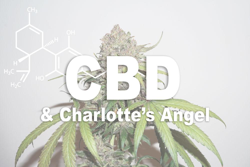 CBD Charlotte's Angel & CBD