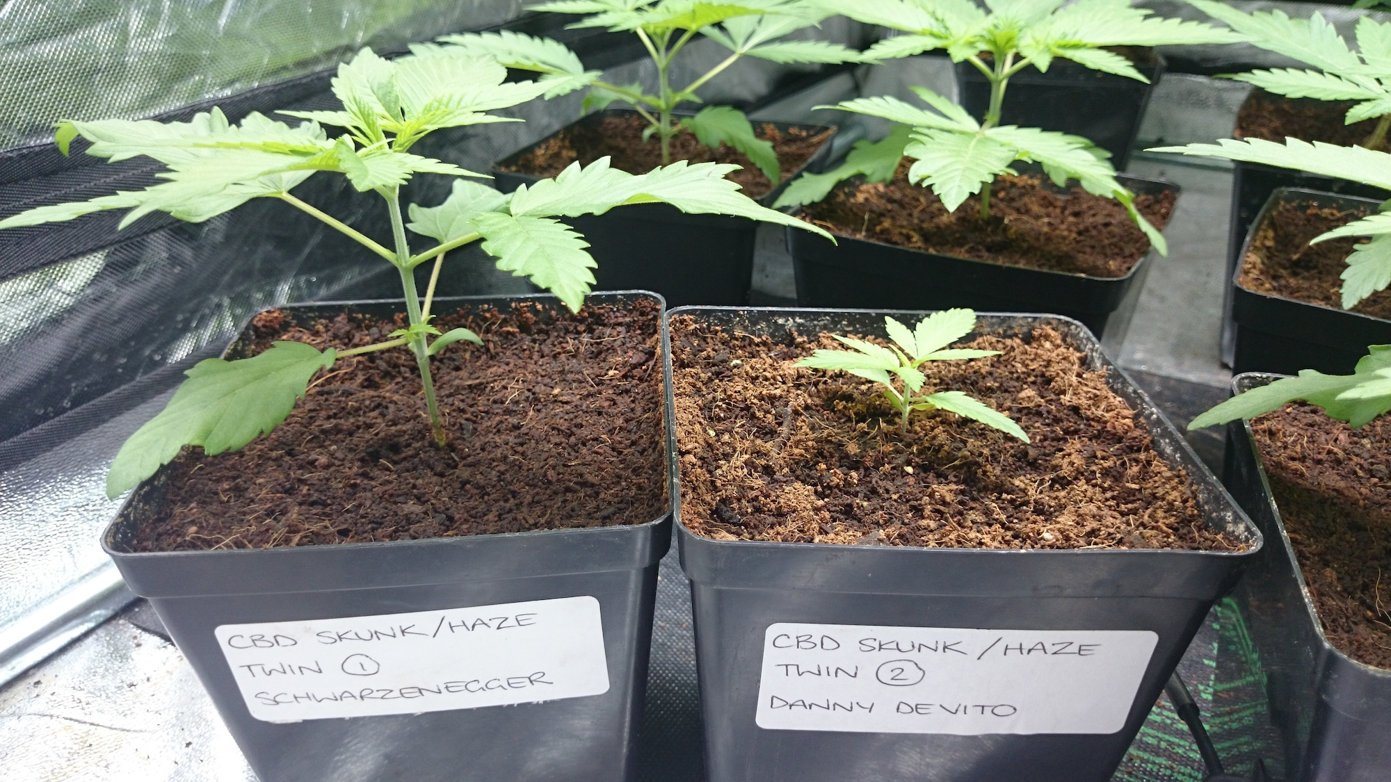 2 plants from one seed, twins