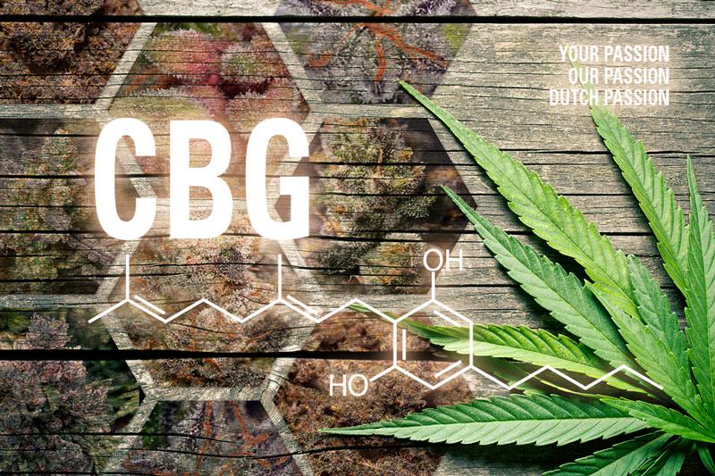 CBG cannabinoïde cannabigerol