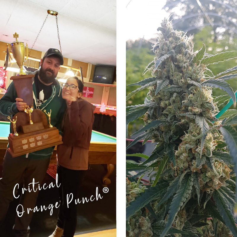 dutch-passion-cannabis-seed-company-critical-orange-punch-1st-prize-at-canadian-420-cannabis-cup