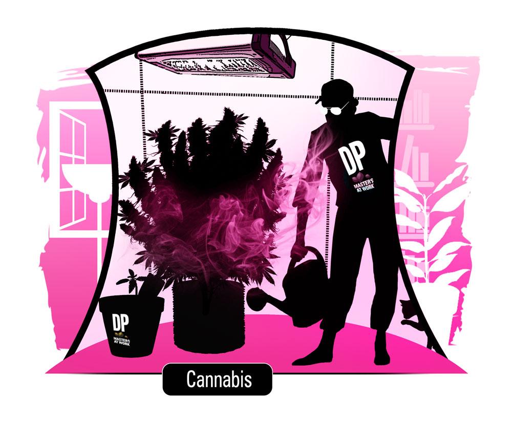 Cannabis-blog.jpg