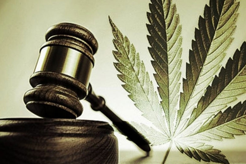 A gavel in a courtroom next to a cannabis leaf