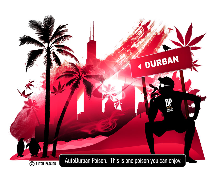 show me the road to durban