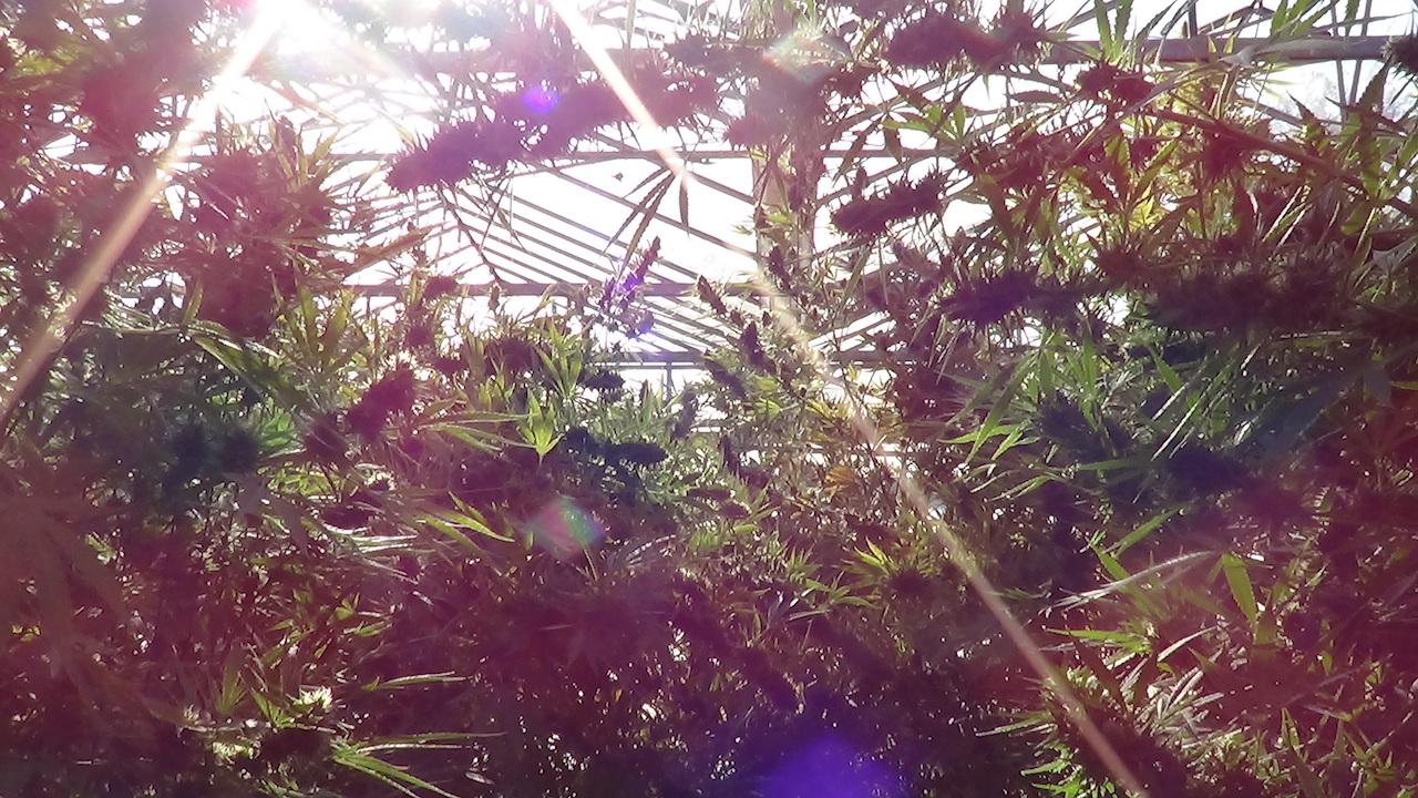 sunshine thru the leaves