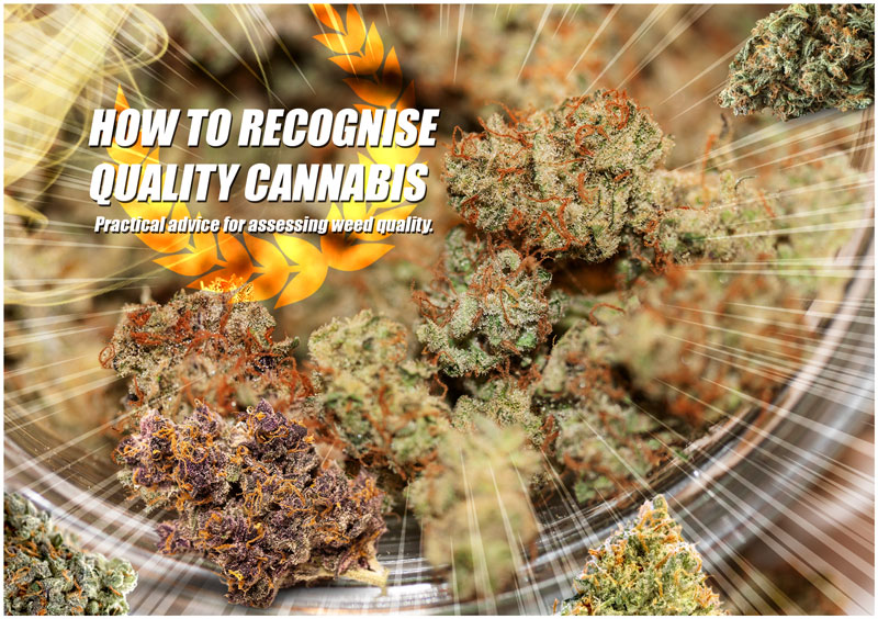 How to recognize quality cannabis