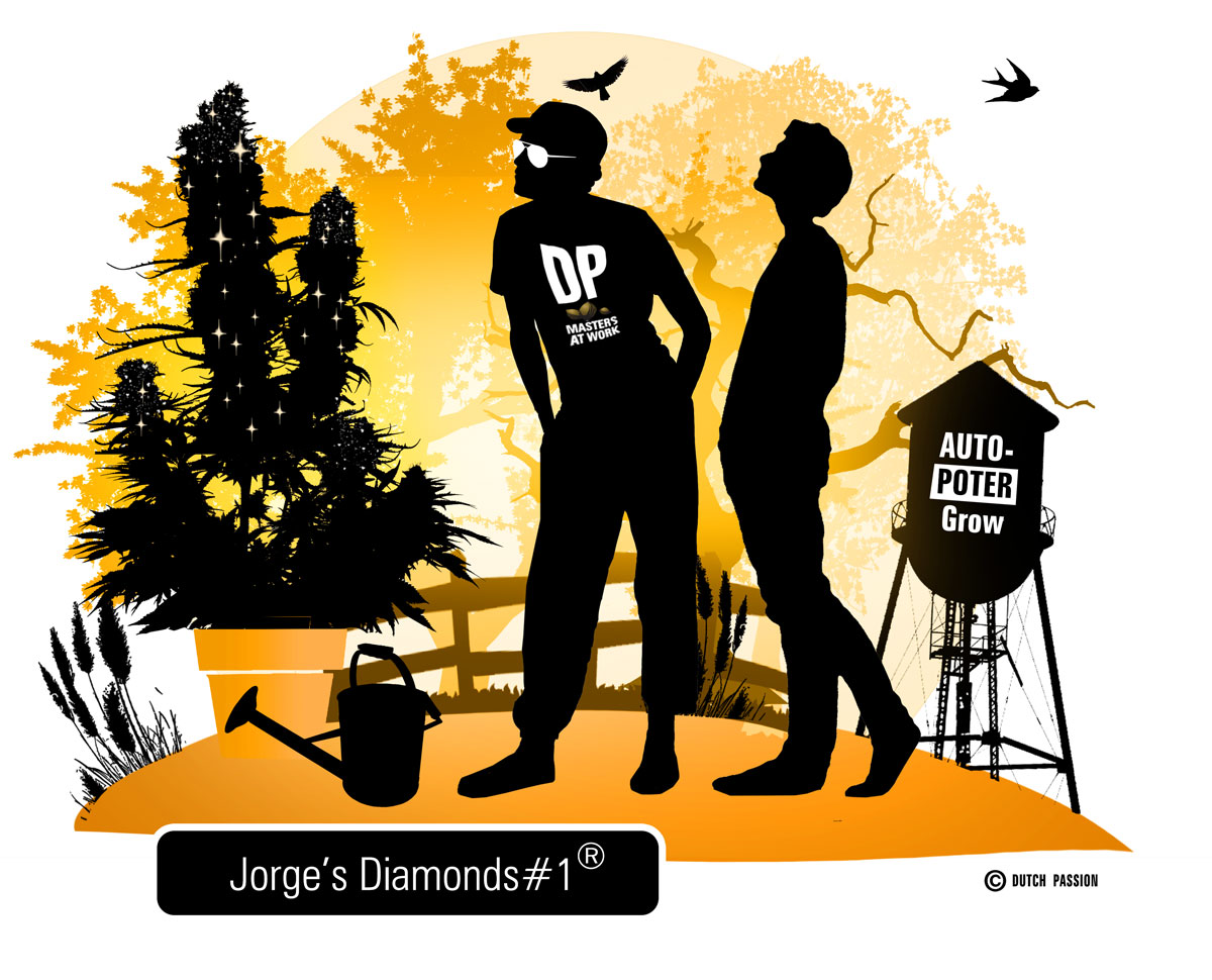 jorge diamond cartoon