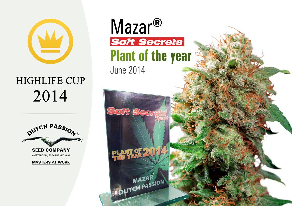 Mazar - cup winner