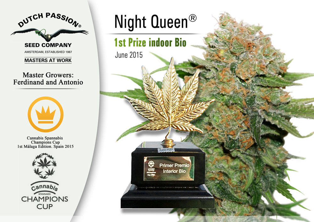 cannabis cup for night queen