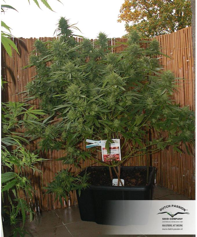 back yard grow