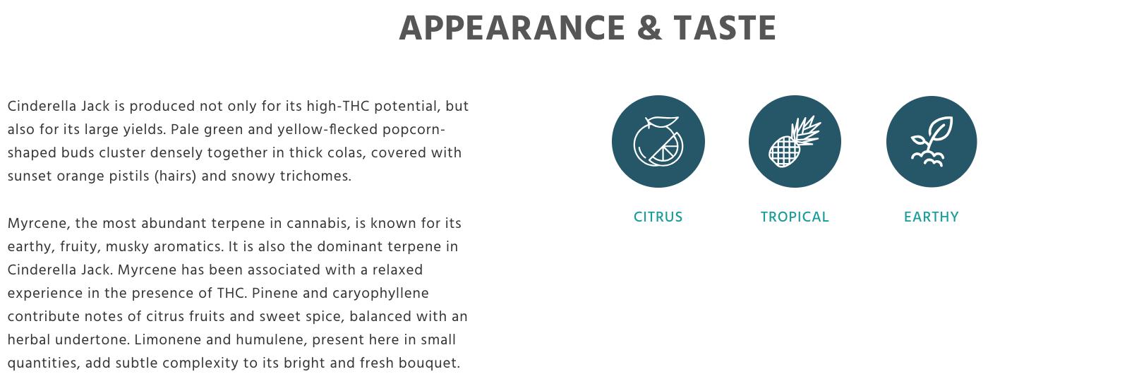 Taste profile Auto Cinderella Jack