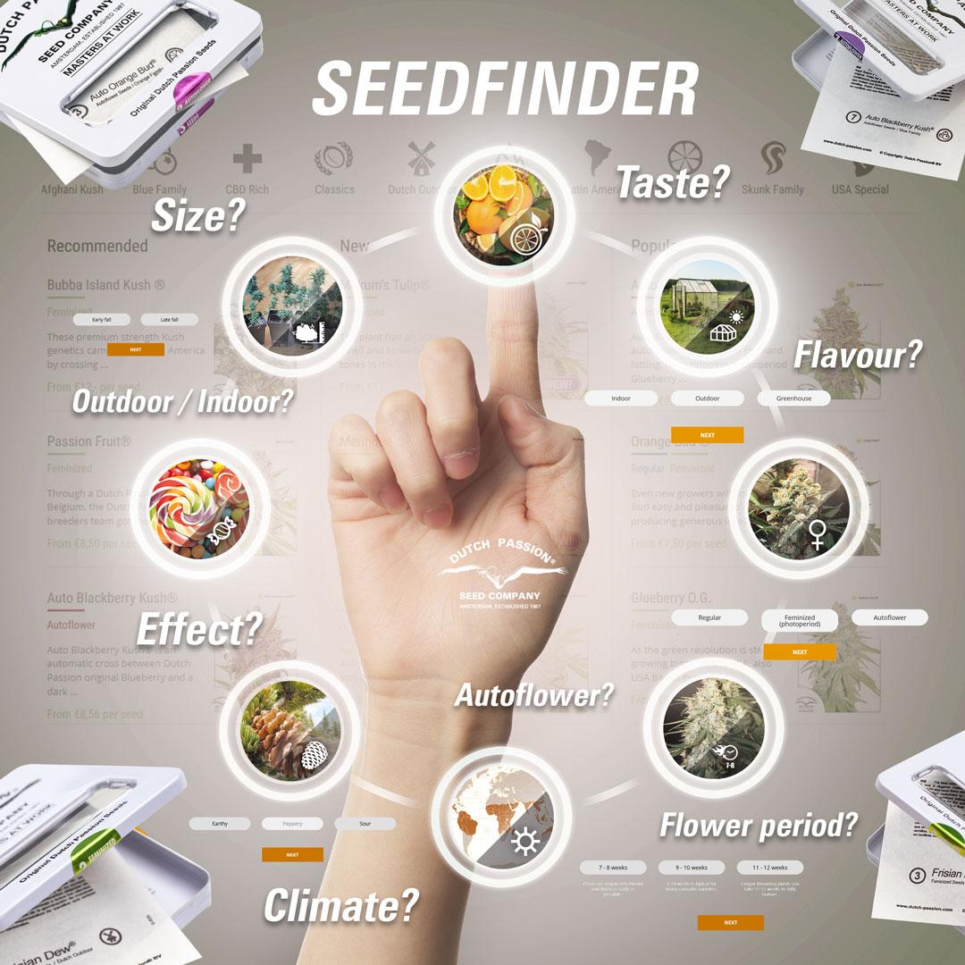 Dutch Passion Seedfinder