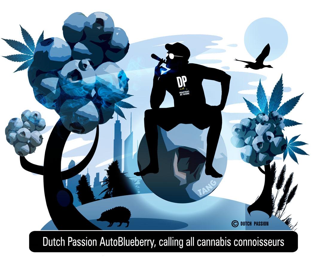 dutch passion blueberry auto