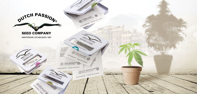 old-genetics-quality-dutchpassion-cannabis-seeds-order-online-stealth-containers-safe-shipping