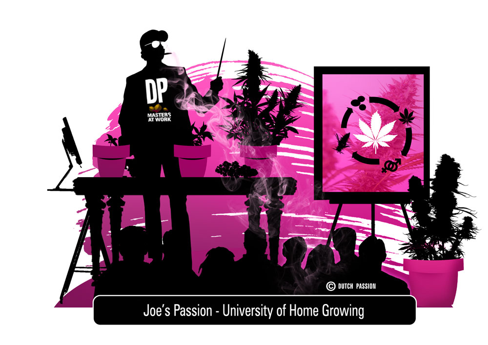 the home grown university