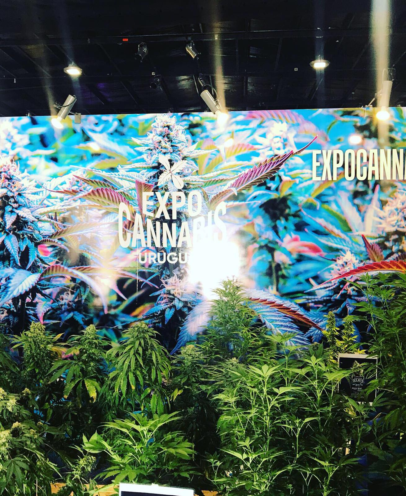 dutch-passion-cannabis-seed-company-expo-cannabis-in-Uruguay