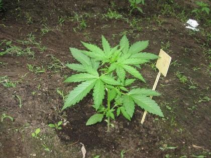 seedling 2