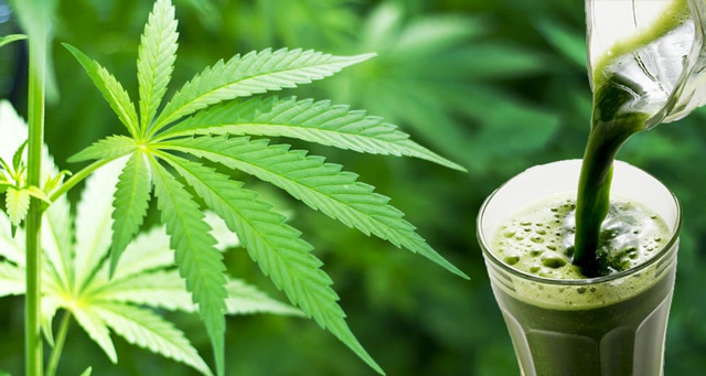 Juicing your cannabis for health benefits