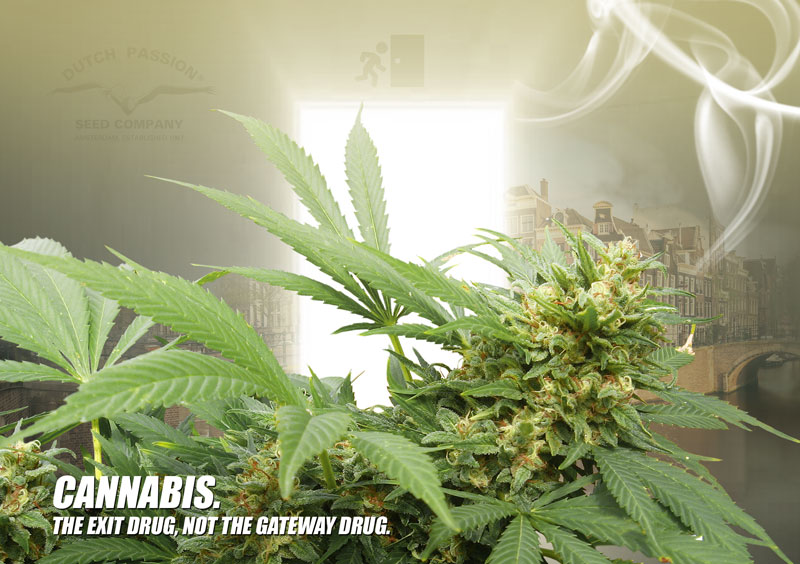 Cannabis. The exit drug, not the gateway drug