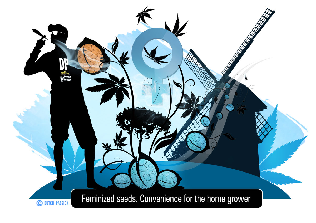 feminized seeds, groovy artwork