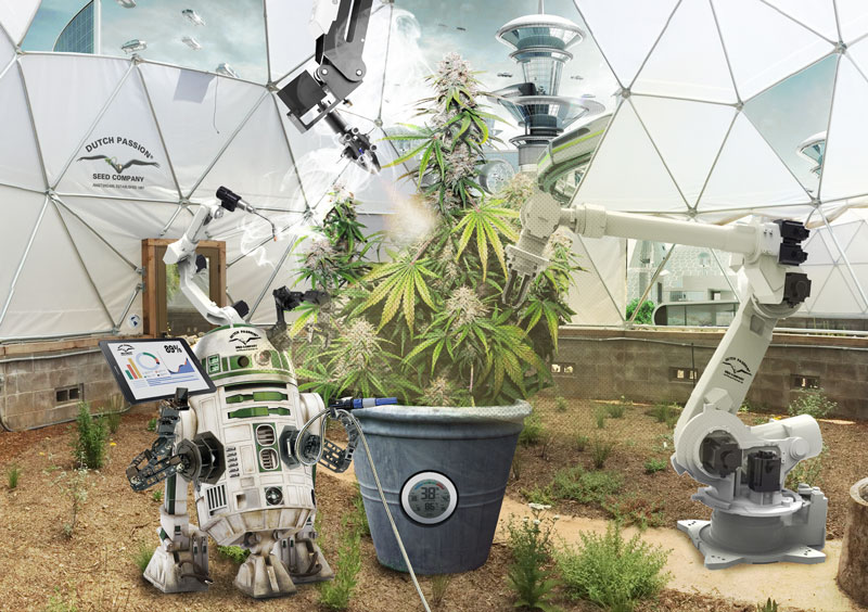 the future of cannabis what can we expect
