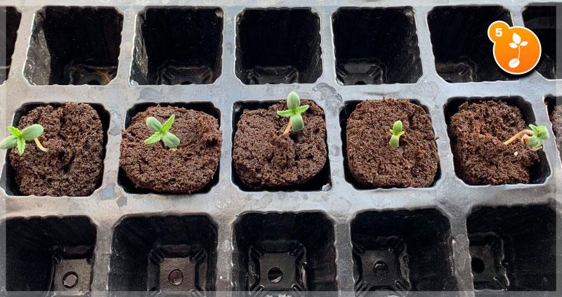 Step 5: Watch your seedlings grow