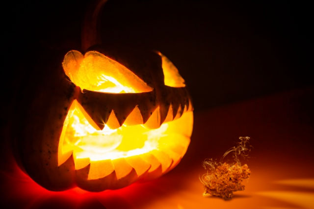 halloween-and-cannabis-spooky-carved-pumpkin-cannabis-dutch-passion-seeds