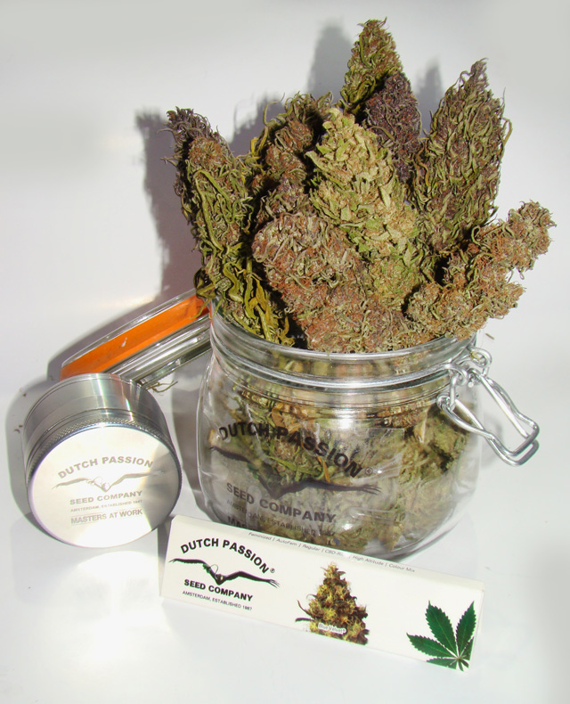 beautifully dried dutch passion buds in a jar