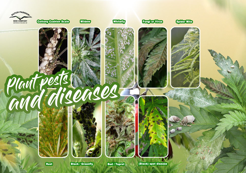 Plant pest and diseases