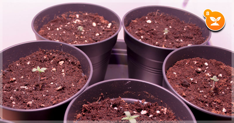 Step 8: Take care of your seedlings