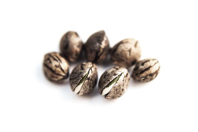 seed%20pic1.jpg