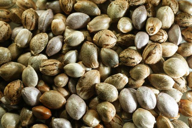seed%20pic4.jpg