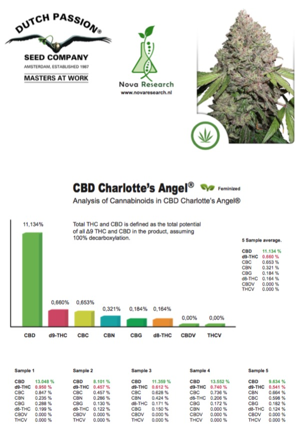 test results charlotte's angel CBD strain Dutch Passion