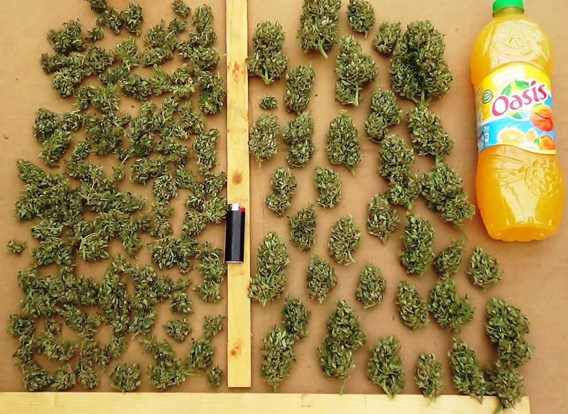 nice harvest shots, stacks of buds