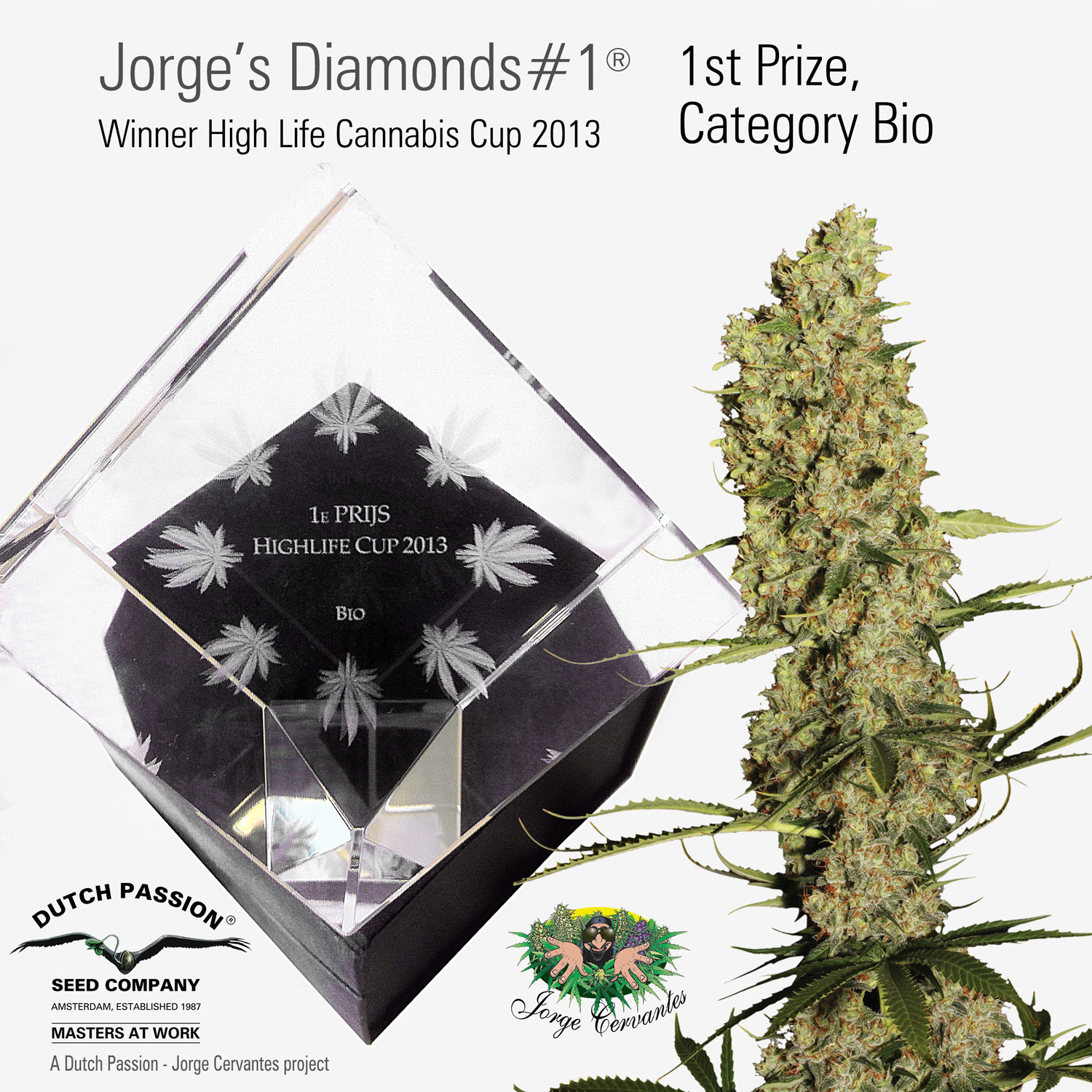 Dutch Passion Jorge U0026 39 S Diamonds Wins 1st Prize At High Life Cannabis Cup 2013