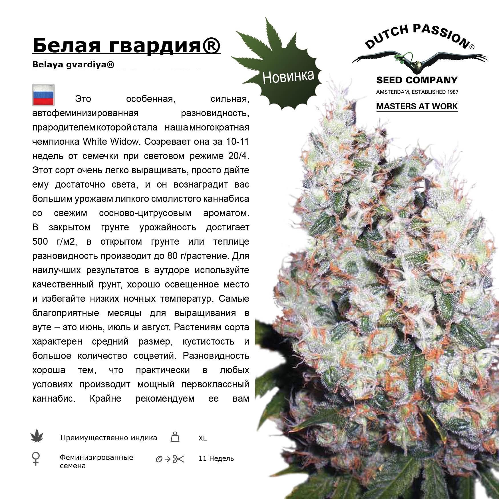 http://www.dutch-passion.nl/img/nieuwsbrief_org/Rus%20Belaya%20gvardiya.jpg