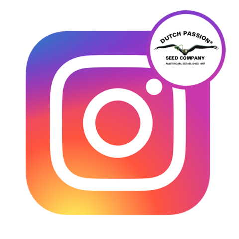 instagram-logo-dutch-passion