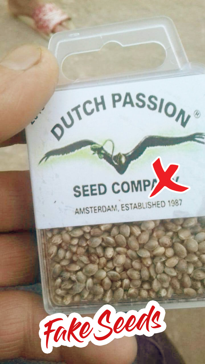 Fake seeds found in Morocco