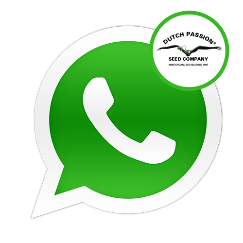 whatsapp-logo-dutch-passion