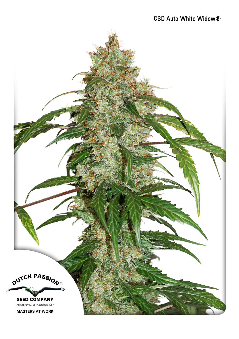 Greenhouse Seeds Usa